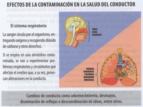 Efectos en el sistema respiratorio que provoca la contaminación de los vehículos